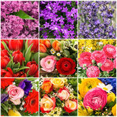 Tulip, rose, lilac, lavender, ranunculus. collage — Stock Photo