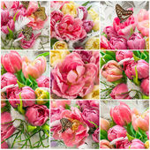 Tulip flowers and beautiful butterflies — Stock Photo