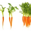 Fresh carrots with green leaves isolated on white — Stock Photo #49568441