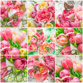 Pink tulip flowers and beautiful butterflies — Stock Photo