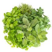 Fresh herbs basil, marjoram, parsley, rosemary, thyme, sage — Stock Photo