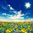 Beautiful tulip flowers field and cloudy blue sky — Stock Photo #49572005