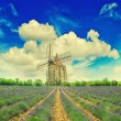 Lavender field with windmill and dramatic blue sky in Provence — Stock Photo #50327709