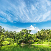 Paradise lake with palm trees and blue sky. tropical nature land — Stock Photo