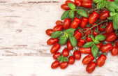 Cherry tomatoes and basil leaves. food background — Zdjęcie stockowe