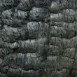 Charred wood background — Stock Photo
