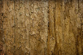 Old rotten tree background — Stockfoto