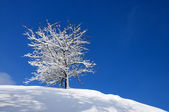 Snow-covered tree on a background of blue sky — Photo