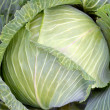 Cabbage grown in the garden in summer large — Stock Photo