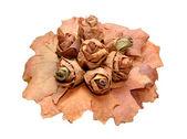 Montón de hojas sobre un fondo blanco — Foto de Stock
