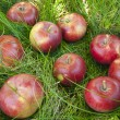 Apples in the grass — Stock Photo