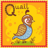 Illustrated alphabet letter Q and quail. — Stock Vector