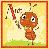 Alphabet letter A and ant. — Stock Vector