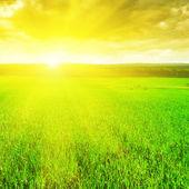 美丽的日出在麦田 — 图库照片