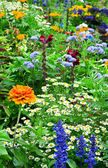 Flower bed of bright flowers — Stock Photo