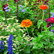 Stock Photo: Flower bed of bright flowers