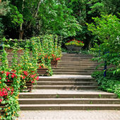 Staircase in the cozy park — Stock Photo