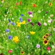 Wild flowers — Stock Photo #19234467