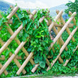 Wooden fence — Stock Photo #19827259