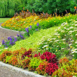 Delightful flower bed in the summer park — Stock Photo #20753513