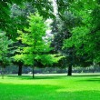 Summer park with beautiful green lawns — Stock Photo #20882047