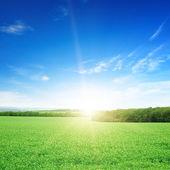 Zonsopgang boven een groen veld — Stockfoto