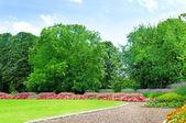 Summer garden with lawn and flower garden — Stock Photo
