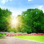 Amanecer en el parque bonito verano — Foto de Stock