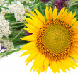 Flower of sunflower and other wildflowers - Stock Photo
