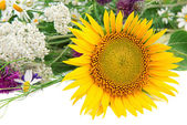 Flower of sunflower and other wildflowers — Stock Photo