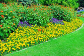 Beautiful flowerbed in summer park — Stock Photo