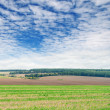 Stock Photo: Fields and blue sky