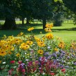 Stock Photo: Multi colored flower bed