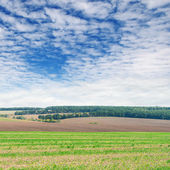 Fields and blue sky — Stock Photo