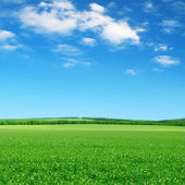 Green field and blue sky — 图库照片