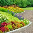 Delightful flower bed in summer park — Stock Photo #24075449