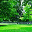 Summer park with beautiful green lawns — Stock Photo #24582975