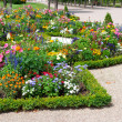 Delightful flower bed in the summer park — Stock Photo #24843523