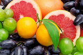 Beautiful background of tropical fruit — Stock Photo