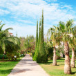 Beautiful avenue with palm trees and cypresses — Stock Photo