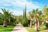 Hermosa avenida con palmeras y cipreses — Foto de Stock