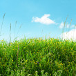 Meadow and beautiful blue sky — Foto Stock
