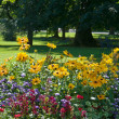 Stock Photo: Flower bed and lawn