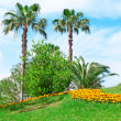 Tropical palm trees in a beautiful park — ストック写真