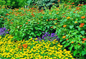 Vackra blomsterrabatt i sommaren park — Stockfoto