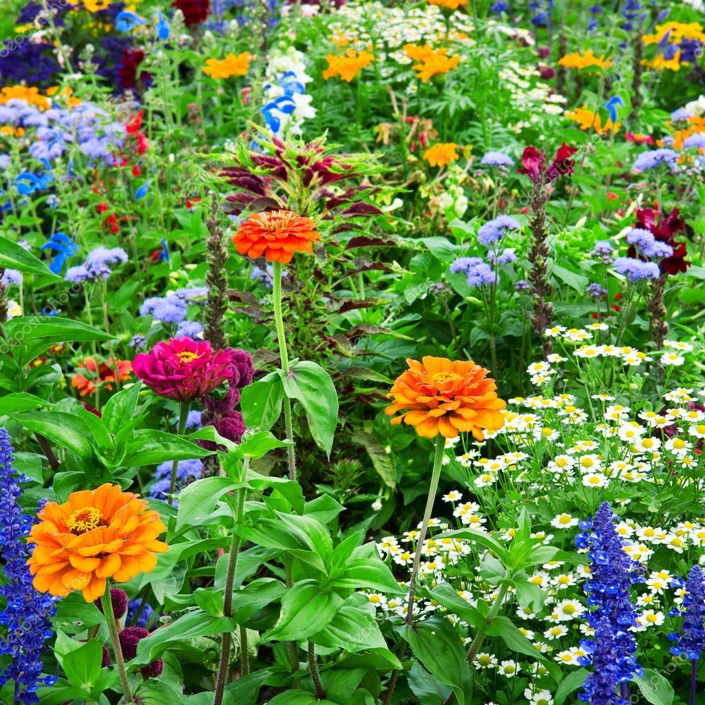 Красивые летние цветы для клумбы фото и названия