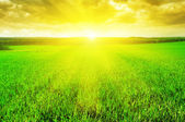 Hermoso amanecer sobre un campo de trigo — Foto de Stock