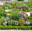 Delightful flower bed in summer park — Stock Photo #27443509