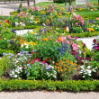 Delightful flower bed in the summer park — Stock Photo #27443509