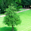 Stock Photo: Lonely tree on the lawn in the park
